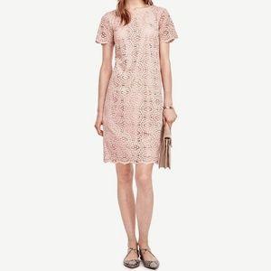 Ann Taylor Blush Pink Lace Dress Size 6
